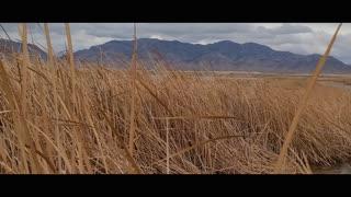 Hot Creek Spring - Kirch Wildlife Management Area