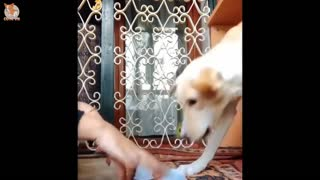 😍Cute funny and smart dog compilation 🤣