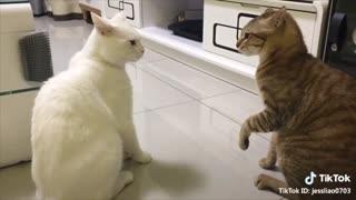English Speaking Cats!