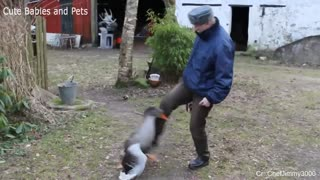 Funny Different Animals Chasing and Scaring People 2021 #