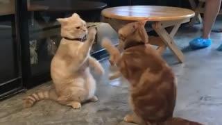Hhhhh. My cats play