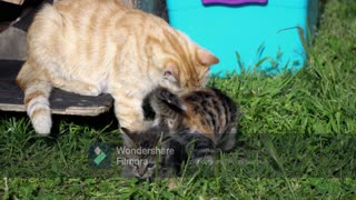 Mother cat showing love to her kittens: