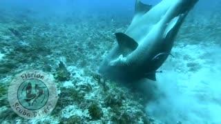 Never Seen Before - Shark Mating