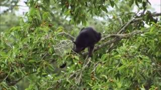 Amazing Animal Wildlife Documentary - Wildlife Animal 2021