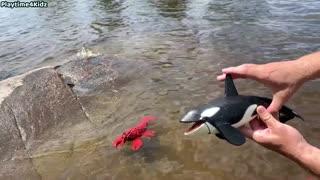 Sea Animals Toys at Shore 2021