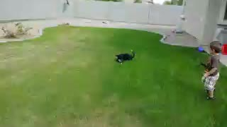 Crazy puppy plays with baby