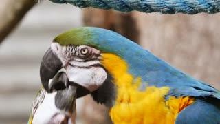 Ara beautiful parrots
