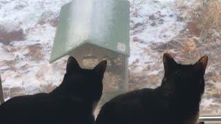 Cats watching Cat TV