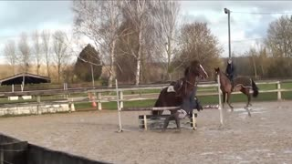 fun horse bloopers to watch