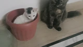 Cat jumps out of bucket 2021