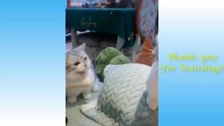 funny clips about animals