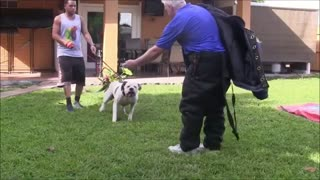 Simple Steps To Make Dog Become Fully Aggressive
