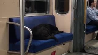 Black dog asleep on blue subway seat