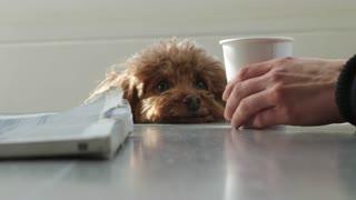 Adorable Cute Dog