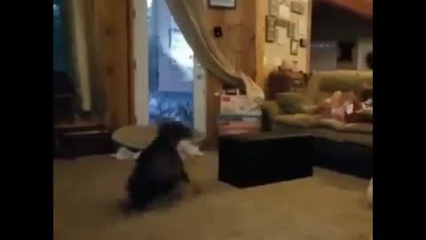 Dog freestyle dance