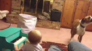 Funny Dog And Baby Have Musical Duet
