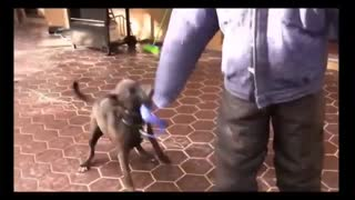 Make your Dog Become Aggressive with few steps