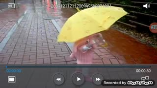 Little lady in pink under a yellow umbrella.