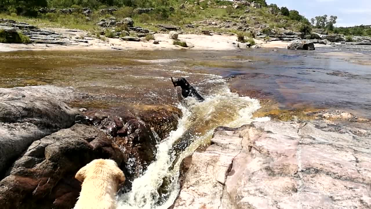 Hunden blir tatt av strømmen - så dukker den uventede redningen opp