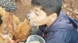 Feeding chickens Wich their hands