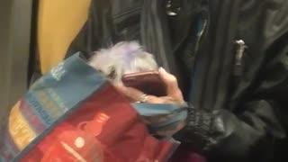 Woman and dog hair purple dye