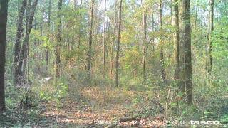 Trail Camera 2