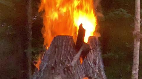 Stump Burning