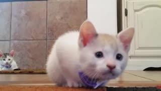 Killer kittens