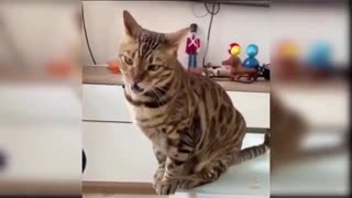 funny cats Change your Mind 2021😍