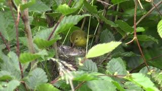 Mother Bird is feeding her children.