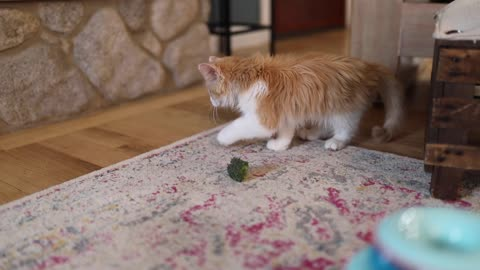 Cat plays with a piece of broccoli