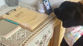 Dog addicated to cell phone