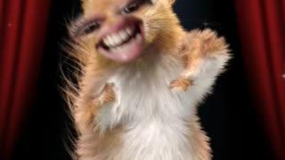 Squirrel dancing