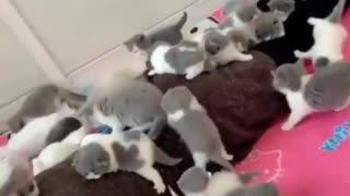 Cat Family Cute kitten