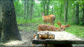 Doe with fawn (( cute wild animals ))