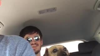 Dog Pretends it's a Pigeon