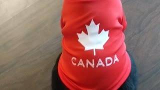 Eh, Canadian (Cat)
