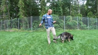 "German Shepherd ""Arkie"" | Dog Aggression | Amazing Obedience"