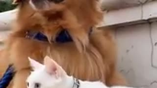 Sweet Cat Protecting His Dog Friend