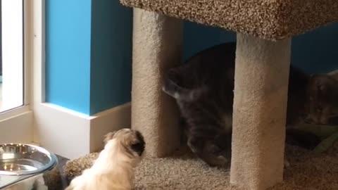 Puppy tries to befriend cat