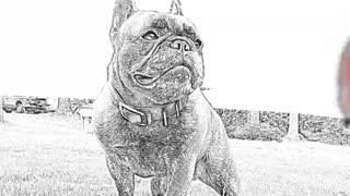 French bulldog doodly drawing