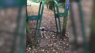 Funny Videos of Animals 2021