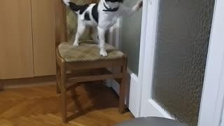 Puppy showing skills