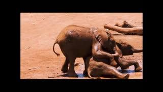 Baby elephants jolly