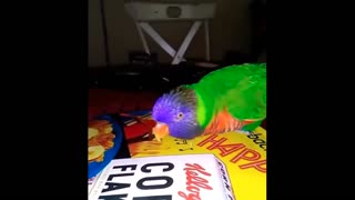 Parrot moment