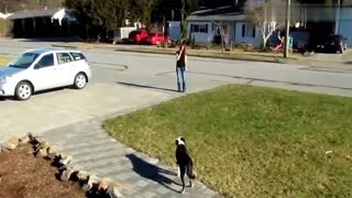 Dogs Meeting their owners after long time