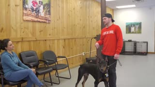 Dog training remote collar and what is the difference between shock collar and e collar