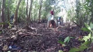 Liberan a un orangután tras rescatado en Indonesia