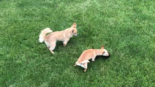 Puppy fun time