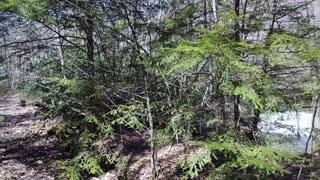 West Virginia State Parks - Camp Creek State Park - Mash Fork Falls